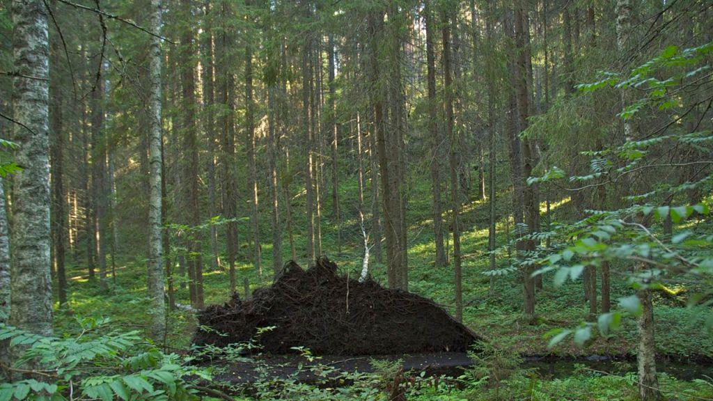 Kuopio (2)